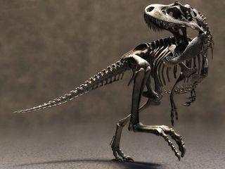 Tyrannosaurus-rex-skeleton-cg