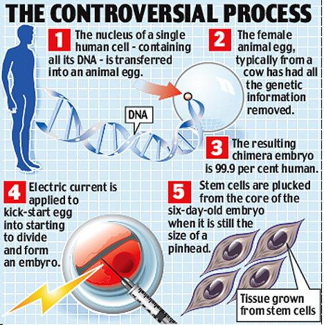 Hybrid_embryo_process